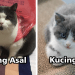 kucing 75x75 - Kajian Dedah dengan Robot Pun Manusia Berlaku Rasis...