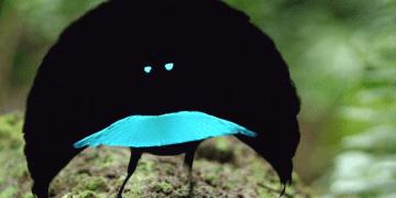 burung hitam 360x180 - Genius - genius Hebat yang Dieksploitasi Hidup Mereka