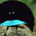 burung hitam 75x75 - Senarai Terjemahan Istilah - Istilah Semasa Oleh DBP