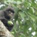 Kenapa monyet penting?