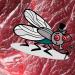 Lalat Cacing Skru - Serangga Mengerikan Yang Memakan Daging